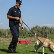 Dog Training – 4 Reasons Why it is Essential